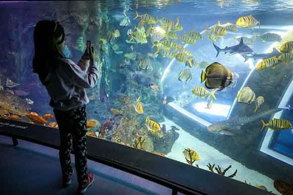 girl taking pictures at a huge aquarium with fish inside at the art and sciences park in granada, spain